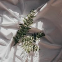 Mahvash Mossaed — leaves on white